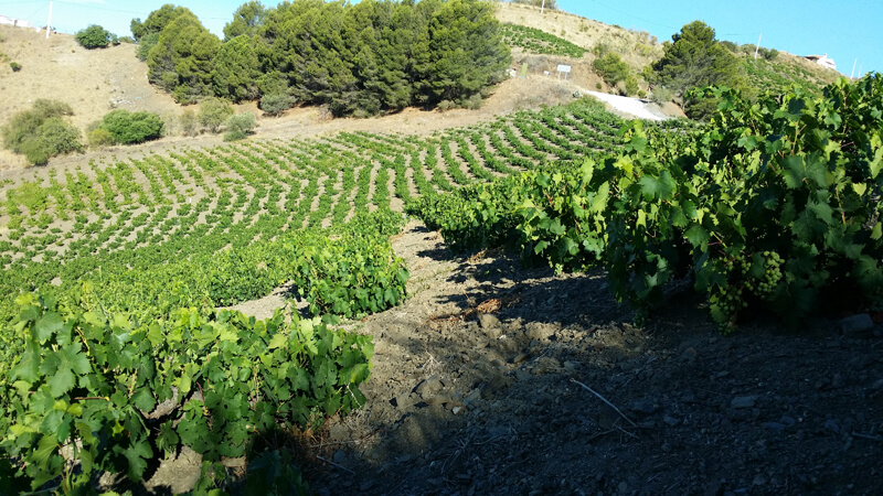 20 wineries you can visit in Malaga - CasaEnChilches.com