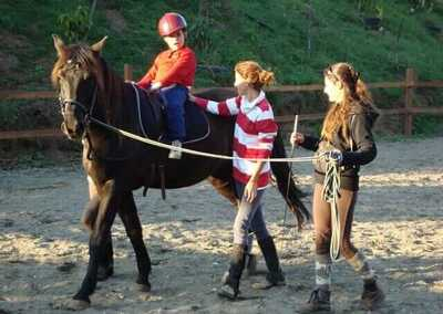 Paarden therapie