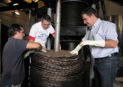 aceite de oliva en almazara de benagalbon