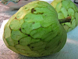 The Cherimoya