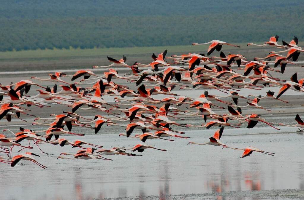 Fuente de Piedra hosts the procession of flamingos this month
