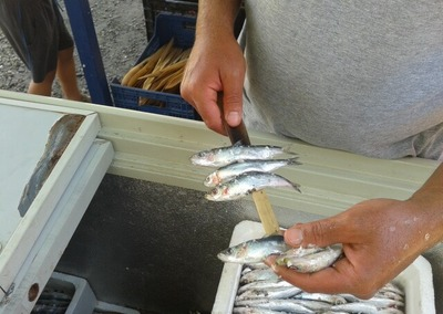 Ensartado de las sardinas